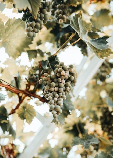 Software für den Weinbau